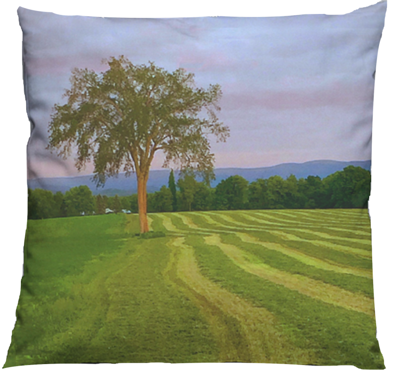 Baldwin Hill elm tree pillow MissyKaolin VIDA farm,Berkshires,green,nature,sunse